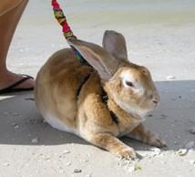 Beach_bunny