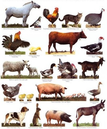 Fabulous English Day by Day: Les Cris d'Animaux en Anglais * ZX47